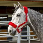 bridon rouge cheval TOP 9 image 1 produit