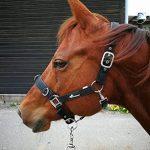 JF Reitsport Fille de l'équitation Licol Pro de la marque JF Reitsport image 2 produit