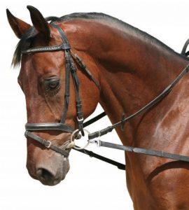 élastique enrênement cheval TOP 0 image 0 produit