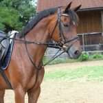 élastique enrênement cheval TOP 4 image 1 produit