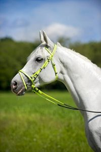 norton équipement cheval TOP 13 image 0 produit