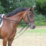 équitation rênes TOP 4 image 1 produit