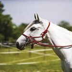 équitation rênes TOP 7 image 1 produit