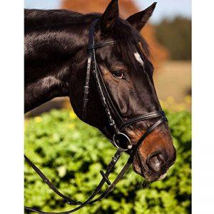 rênes cheval TOP 0 image 0 produit