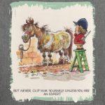 tondre un cheval TOP 3 image 1 produit