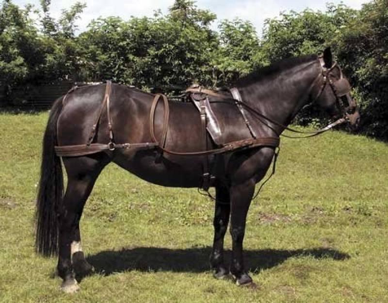 Longe avec assorti A /& S Equestrian miniature en nylon Licol//NON rembourr/é Enti/èrement Remplissage avec F.C